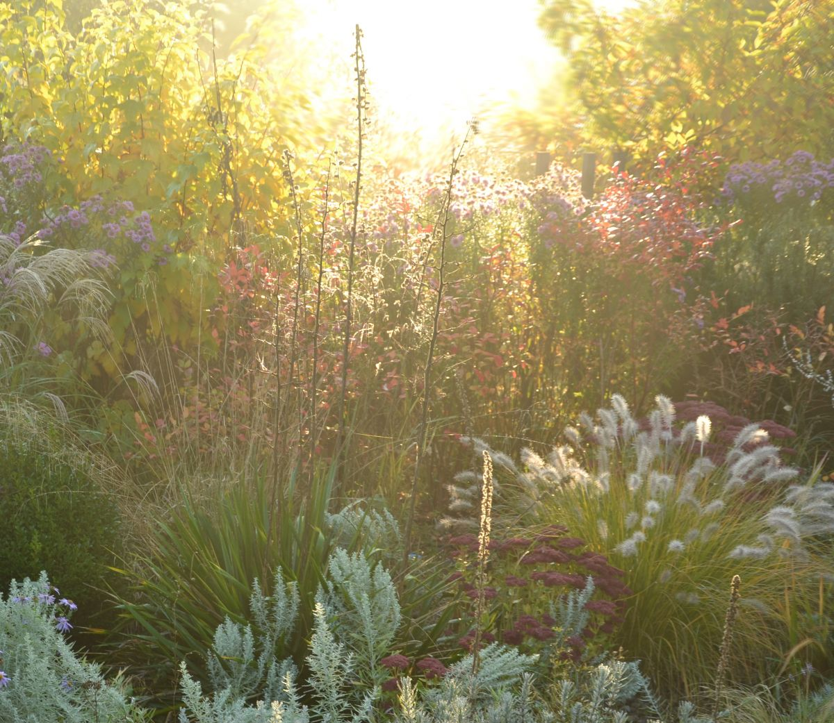 Perennials in the morning light
